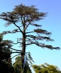 grand arbre 1.2