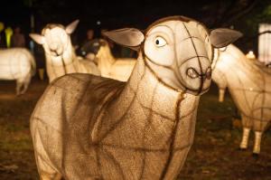 phillip-wong-lantern-festival-fje8jr1