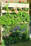 nouvelle-tendance-le-jardin-vertical-20