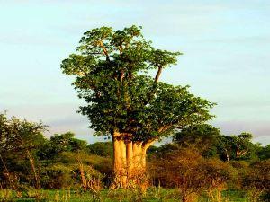 arbre foret