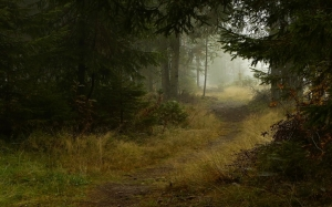 ws_Deep_Forest_Path_2560x1600